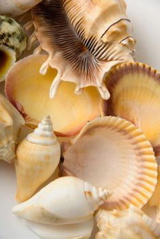 Collecting shells on the beach and storing them in glass containers