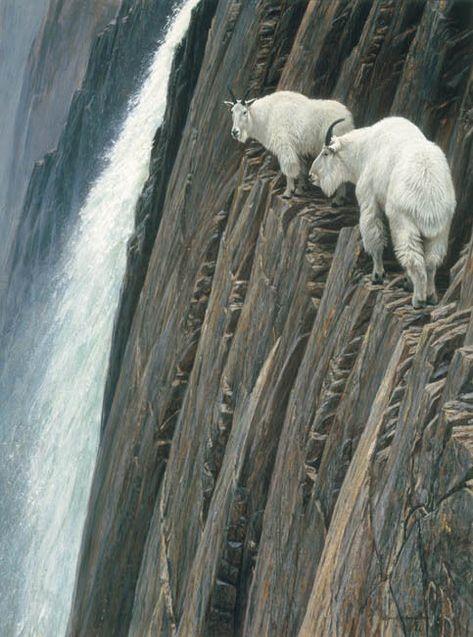 Robert Bateman - Sheer Drop - Mountain Goats - 950 Limited Edition Print | Art, Art Prints | eBay!