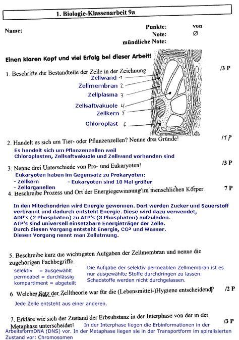 Das Auge Arbeitsblatt | Arbeitsblätter | Pinterest