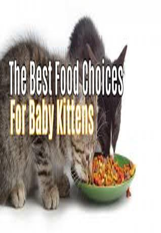 Best Food To Feed Kittens Baby Kittens Kitten Food Homemade Cat Food