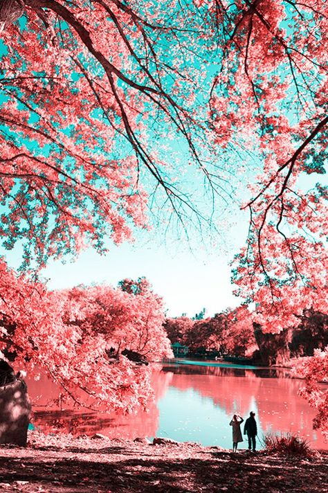 Photographer Paolo Pettigiani captured a unique view of Central Park.  infrared photography | Central Park photography | NYC | pink trees