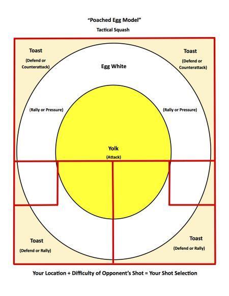 Egg Model For Squash Tactics Learntoserveintennis Squash Tennis Play Squash Squash Rules