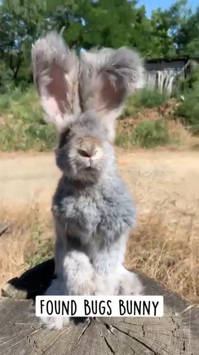 Found Bugs Bunny