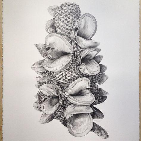 Mr Banks - botanical graphite drawing by Lauren Maysk