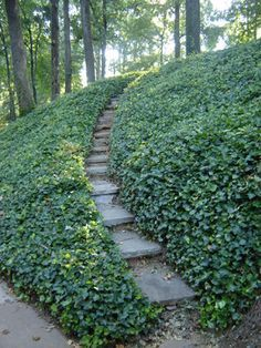 Great Ground Cover For A Sun Filled Hill Purple Google Search Backyard Pinterest Garden Landscape And Traditional
