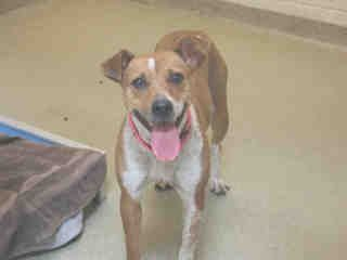 St Louis Pet Adoption Dog Pounds Humane Society Pet Adoption