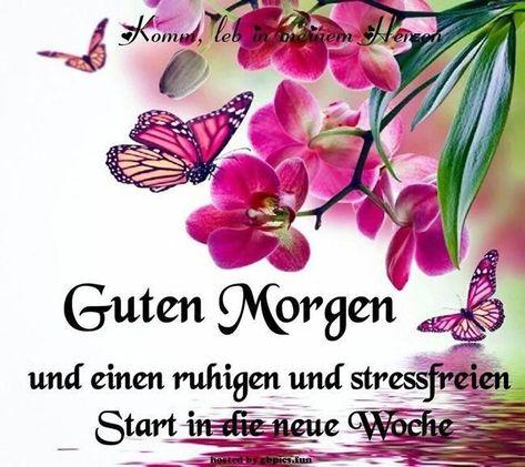 good morning start of the week #gutenmorgenwochenstart #gutenmorgenwochenstartpics #G ... - #guten - #guten #gutenmorgenwochenstart #gutenmorgenwochenstartpics #morning #Start - #new