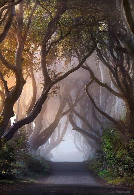 Scary Woods Nature Photography Beautiful Landscapes Nature