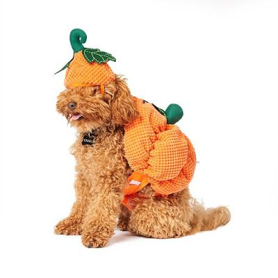 13 Spooky Halloween Gifts For Dogs Australian Dog Lover