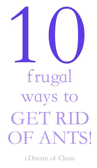 10 frugal ways to get rid of ants!! by @iDreamOfClean