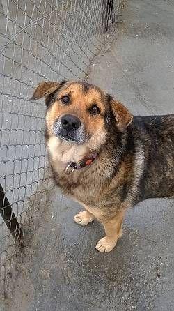 Tiere In Not Seite Hunde Aus Rumanien Hunde Aus Rumanien Tiere In Not Tiere Suchen Ein Zuhause