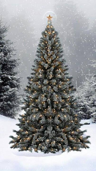 ~Christmas tree outdoors