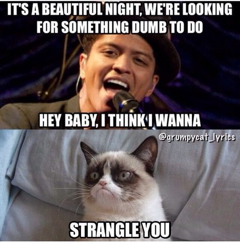 Funny Grumpy Cats Songs Funny Quotes Funny Grumpy Cat Memes Grumpy Cat Quotes Funny Cat Memes