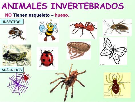 Imágenes De Los Animales Invertebrados Descargar Imágenes Gratis List Of Animals Animals Insects