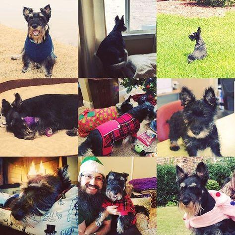 dallas Doggo Birthday Alert!🐶🎉 Zeus...