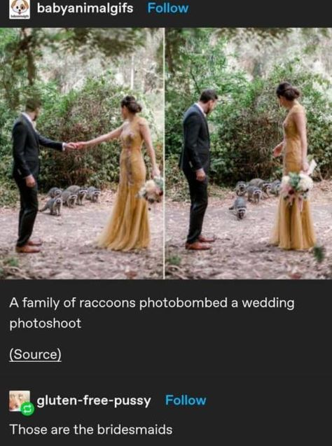 Really Funny, Funny Cute, The Funny, Hilarious, Clean Memes, Bad Timing, Pretty And Cute, Stupid Funny Memes, Wedding Photoshoot