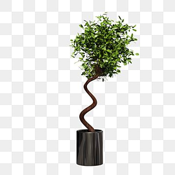 Potted Plant Potted Plants Bonsai Home Decoration Png Transparent Clipart Image And Psd File For Free Download Watercolor Plants Potted Plants Planting Flowers