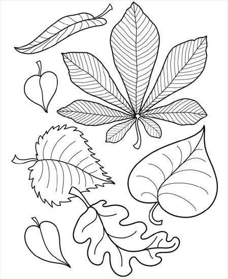 Yaratici Projeler Kagit Kumas Kece Cicek Kaliplari Ve Ornekleri Cicek Sonbahar Sanati Boyama Sayfalari