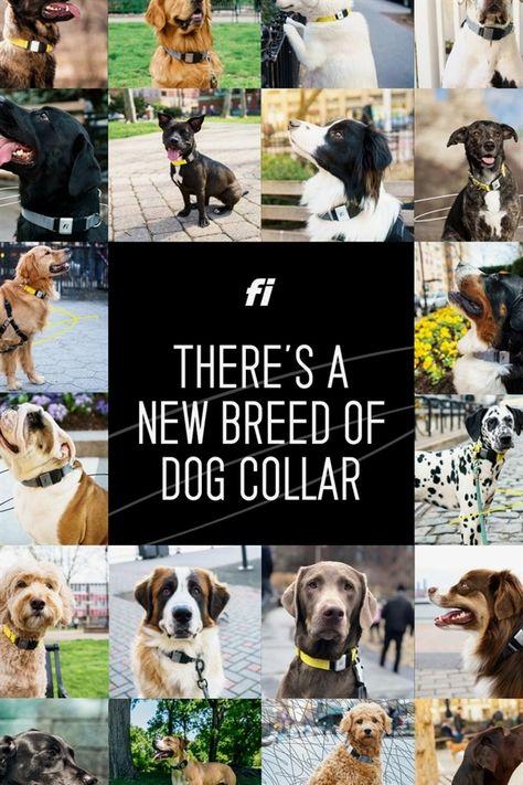 Paw Law Dog Training Daycare Dog Training Reddit Robert