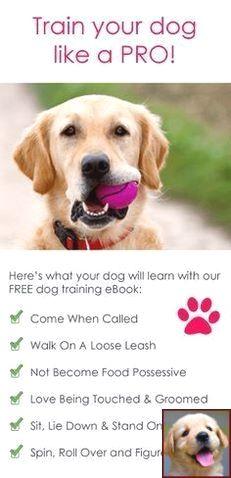 1 Have Dog Behavior Problems Learn About Dog Behavior Shaking