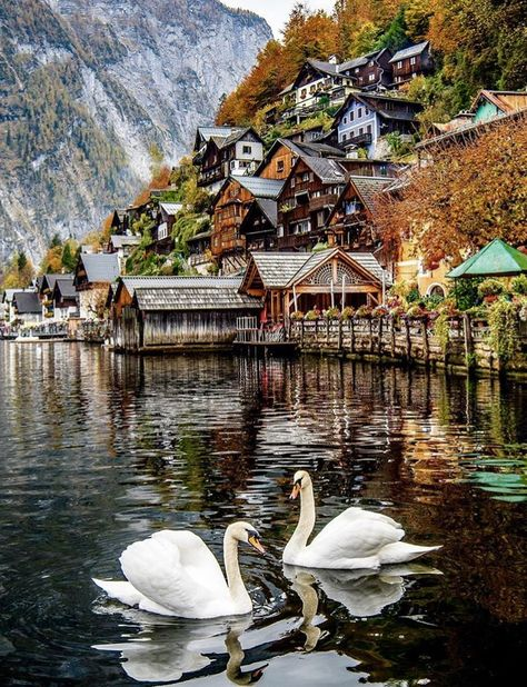Hallstatt - Austria ❤️❤️❤️ Pic by ✨ . for a feature ❤️ Places To Travel, Places To See, Travel Destinations, Europe Centrale, Travel Collage, Hallstatt, Austria Travel, Travel Aesthetic, Travel Deals