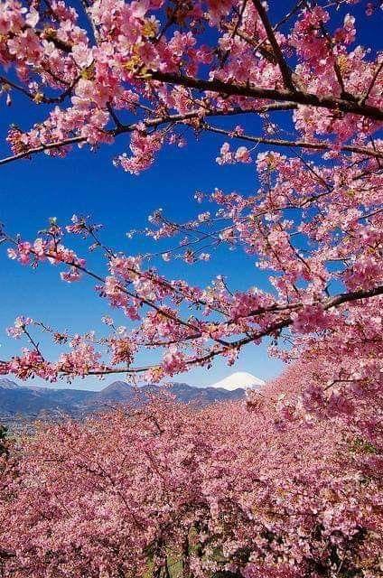 Pin By Toura On Winter Spring Summer Fall Autumn Cherry Blossom Spring Scenery Japan Sakura