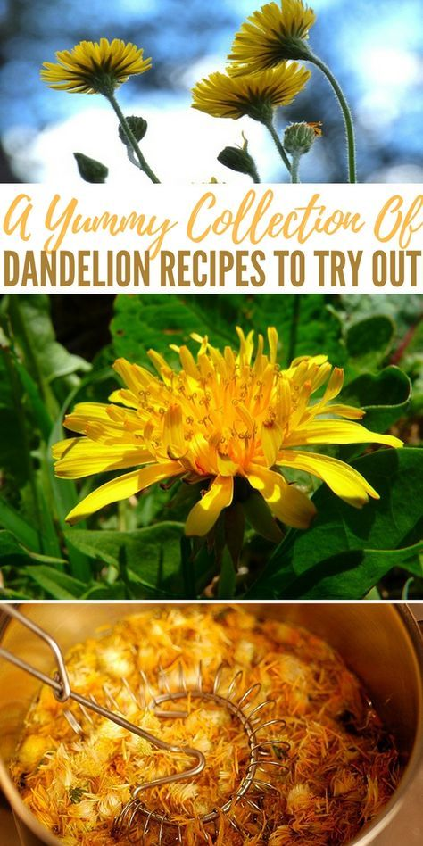 A Yummy Collection Of Dandelion Recipes To Try Out Shtfpreparedness Dandelion Recipes Edible Flowers Recipes Foraging Recipes
