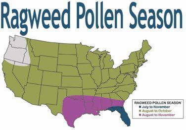 Ragweed Pollen Season Things I Hate Pinterest Allergies And - Us ragweed pollen map