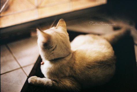 ภาพฟ ล มแบบแมวๆ Pantip