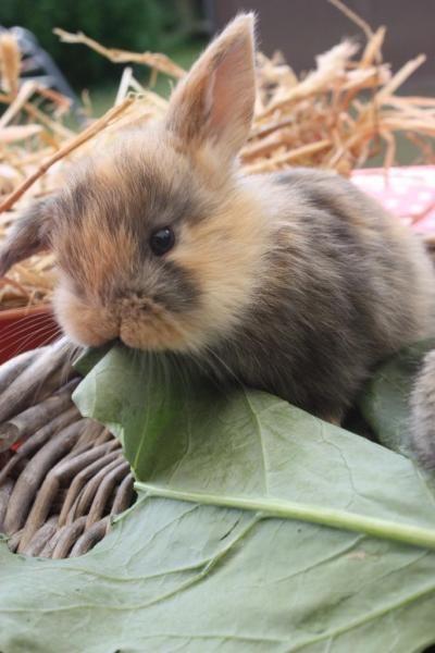 Kaninchen Susse Tiere Tierbabys Bilder Hasen Fotos