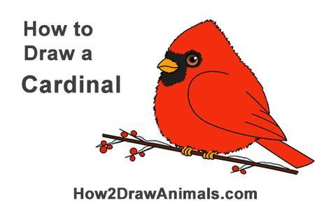Cardinals Cartoon Cardinals Cartoon Kardinals Cartoon
