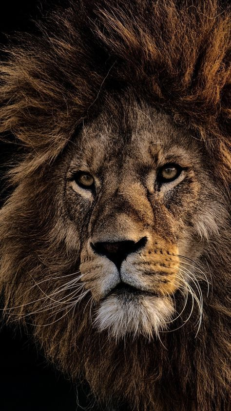 Best 5 Black Lion Wallpapers Background For Your Android or Iphone Wallpapers #android #iphone #wallpaper