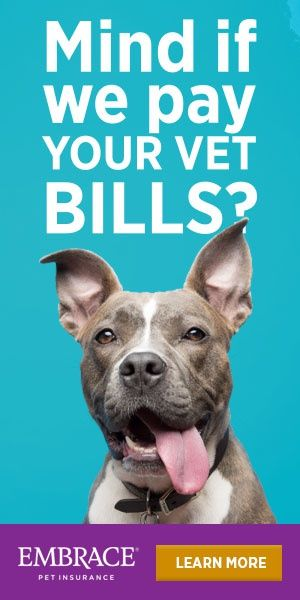 Pet Insurance Doesn T Have To Be Tricky Embrace Makes It Simple