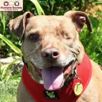 Nashua Nh Mixed Breed Large Meet Coco A Dog For Adoption Dog Adoption Cat Adoption Cat Stock