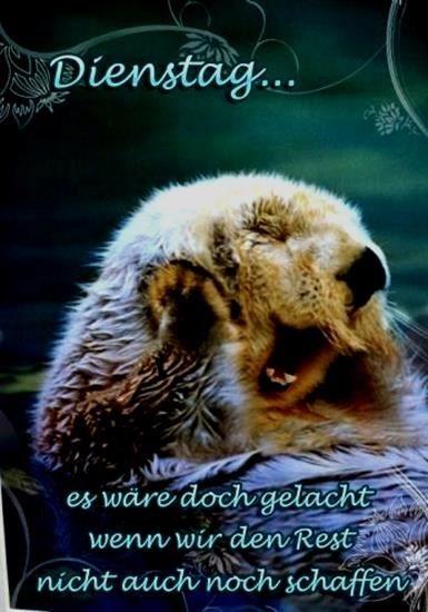 Dienstag Bilder Lustig Kostenlos Gb Bilder Gb Pics Gastebuchbilder Tiere Lustige Tiere Tierbilder