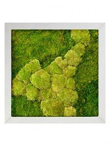 Moosbild Modell Lara 70x70 Cm Mit Edelstahlrahmen Moosbilder Gartenbrunnen Bilder