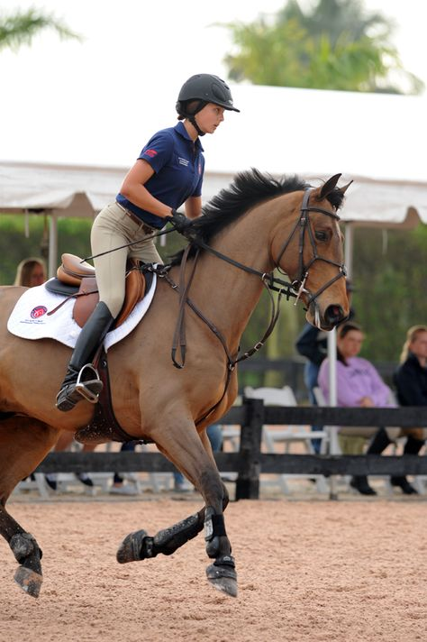 - Horse - George Morris training session - I wish I could. George Morris training session - I wish I could go to a George Morris clinic so bad. George Morris, Pretty Horses, Horse Love, Horse Girl, Beautiful Horses, English Riding, Equestrian Outfits, Show Jumping, Horse Pictures