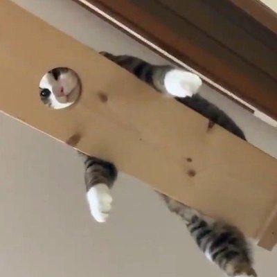 キャットウォークの丸くくり抜かれた穴にお顔をはめて だらんとうつぶせで寛ぐ猫さんに仰天 下から除けば観光地の顔出しパネル風 横から見ればマッサージ施術台風のインパクト さっそくご紹介させて頂きます 猫 ねこ 反省猫