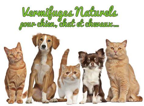 Comment vermifuger naturellement chien, chat, cheval ? Huile de citrouille et terre de diatomée comme vermifuge naturel pour chien, chat, cheval. Dosages