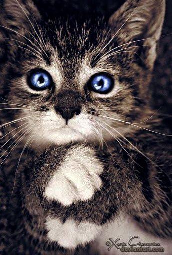 Susse Kawaii Tiere Malvorlagen Jenseits Der Sussen Tierbabys Die Videos Spielen Wo Tiere Katzen Baby Katzen