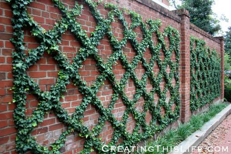 Georgetown brick wall and ivy trellis @ CreatingThisLife.com