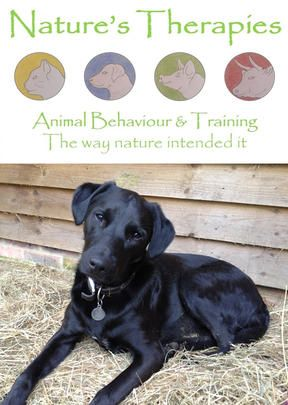 How To House Train An Adult Dog Dogs Training Your Dog Puppy Pads