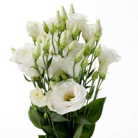 Fiori Lisianthus Bianchi.Lisianthus Bianco Cerca Con Google Fiori Di Compleanno Fiori
