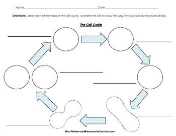 ABOUT THIS DIAGRAM: Students will label each phase of the cell cycle and then draw what occurs during each stage. Re-pin and click on this item to learn more! #celldivision #cellcycle #biology #mitosis #cells #lifescience #stem