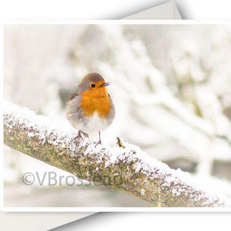 Carte De Voeux Oiseau Rouge Gorge En Hiver Carte Photo Nature