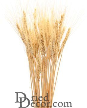 Dried Wheat Bunches 8oz Bunch In 2020 Dried Wheat Wheat Wheat Decorations