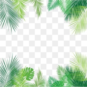 Tropical Palm Leaves Png Png Free Download Png And Vector Tropis Poster Bunga Hijau