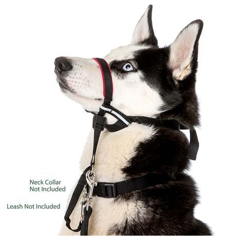 Halti Optifit Head Collar For Dogs Stops Pulling On The Leash