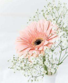 اجمل خلفيات للكتابة عليها خلفيات روعة جاهزة للكتابة عليها أحلى صور خلفيات ورود للكتابة عليه Flower Background Wallpaper Print Design Art Flower Backgrounds