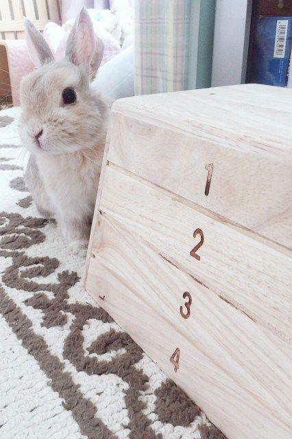 ハッピーバースデイ ガールズ Rabbits ラビッツ うさぎブリーダー専門店 大阪 子ウサギ うさぎ かわいいウサギ